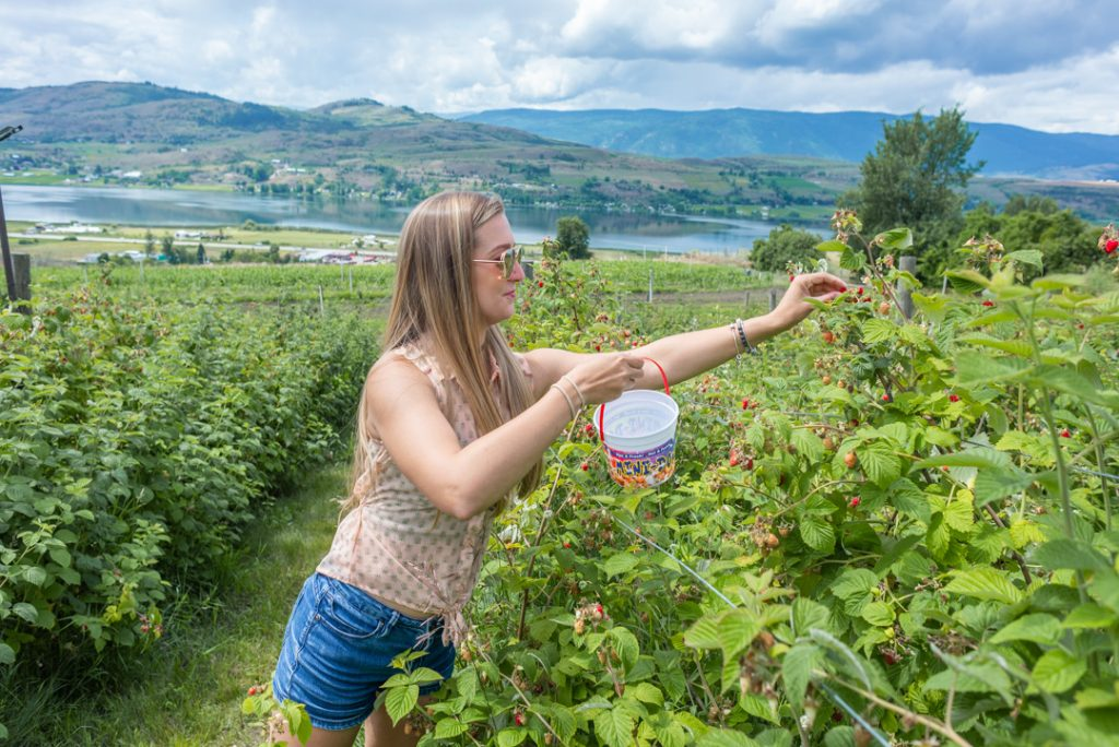 Fruit picking in Vernon Bc