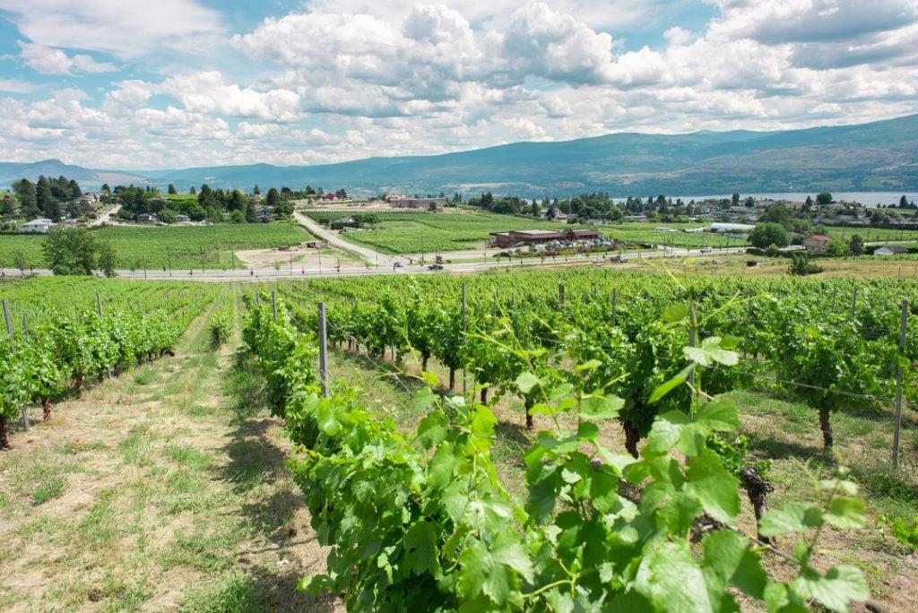 the views on the Kelowna wine tour