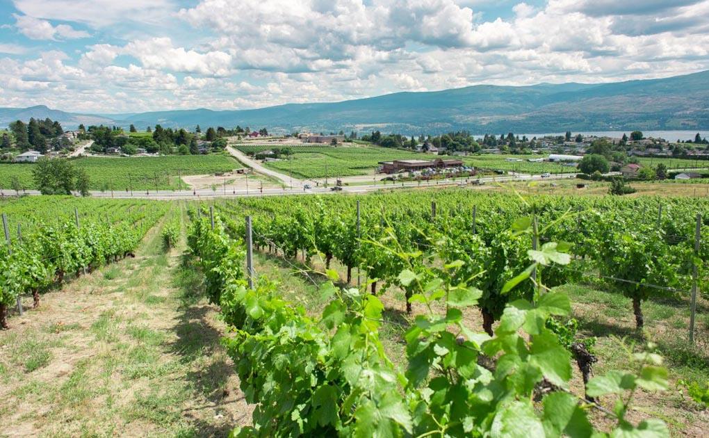 Vineyards in Kelowna British Columbia