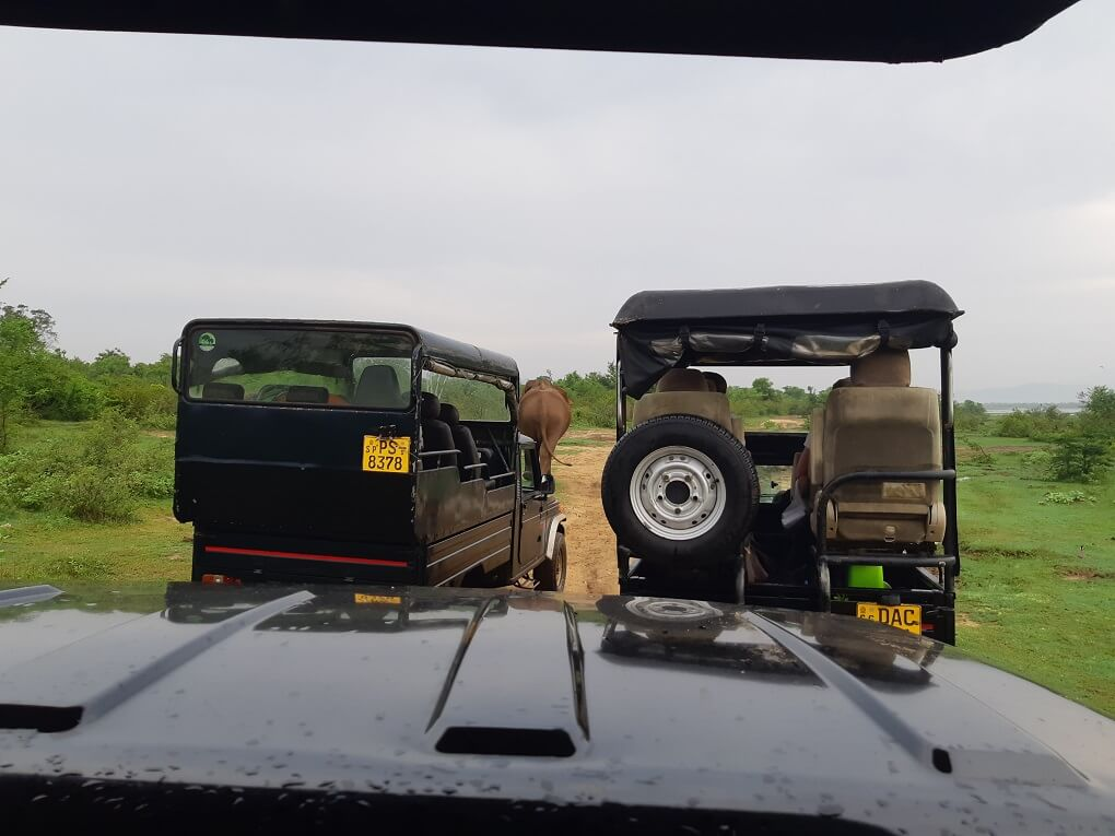 two safari jeeps chasing an elephant in Udawalawe National Park, Sri Lanka