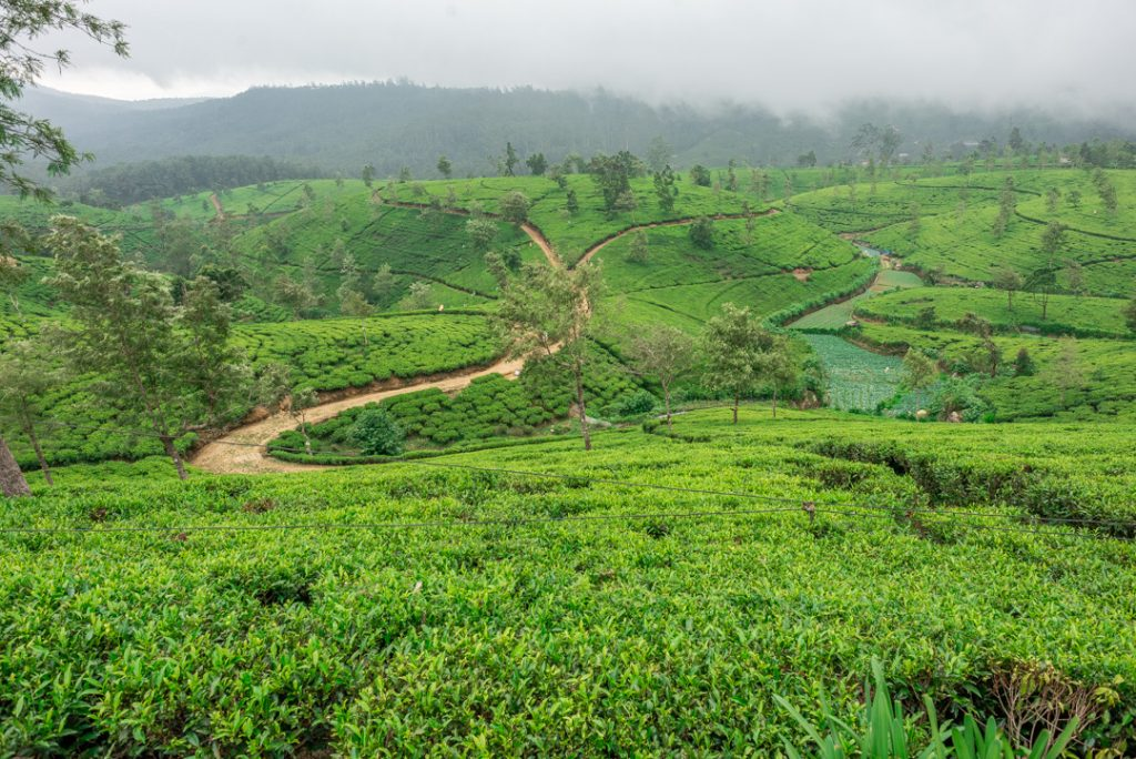 Staying in a guest house with stunning views is one of the best things to do in Nuwara Eliya
