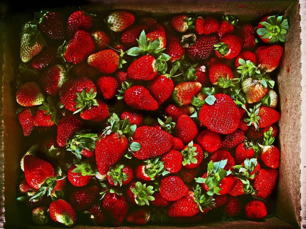 strawberry pickingis a fin activity in saskatchewan