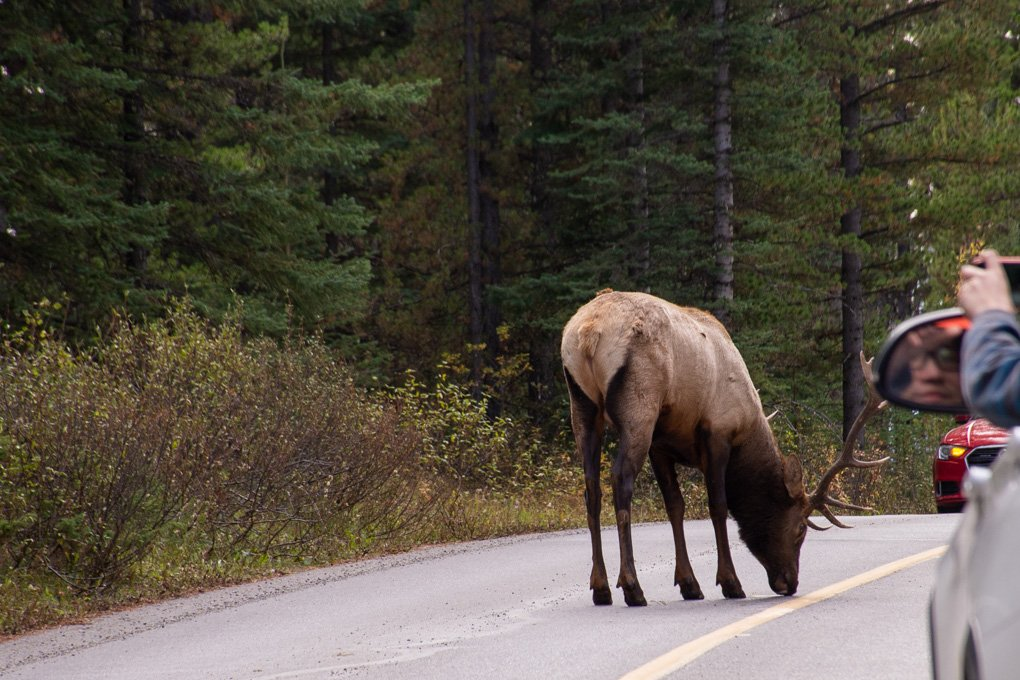 Wildlife watching in Banff National Park