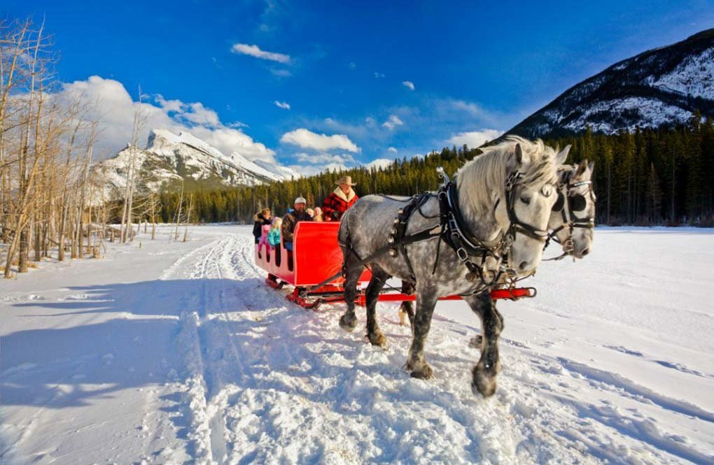 Riding a horse drawn sleig in winter in Banff
