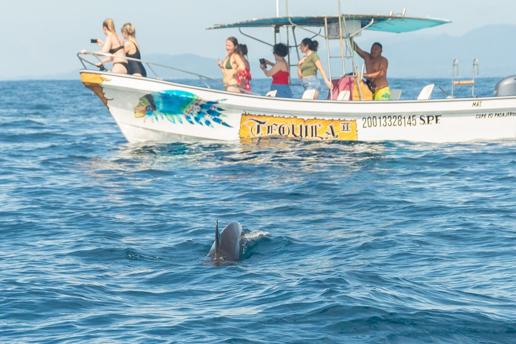 Dolphin Watching in Puerto Escondido
