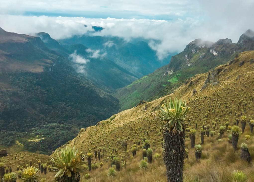A view on the Paramillo del Quindio Summit