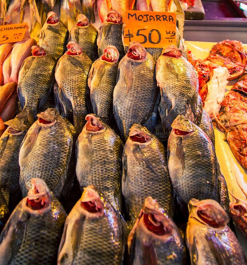 Fresh Fish At La Nueva Viga Market In Mexico City