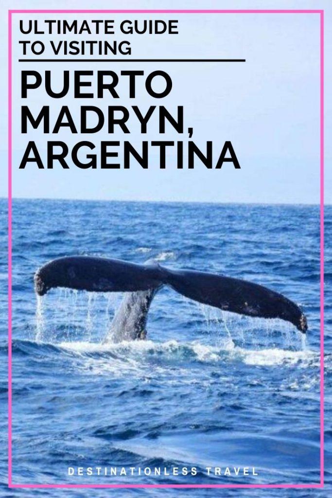 puerto madryn pinterest image
