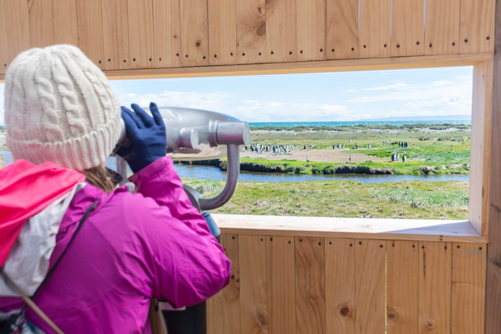looking at penguins in punta arenas chile on a penguin tour
