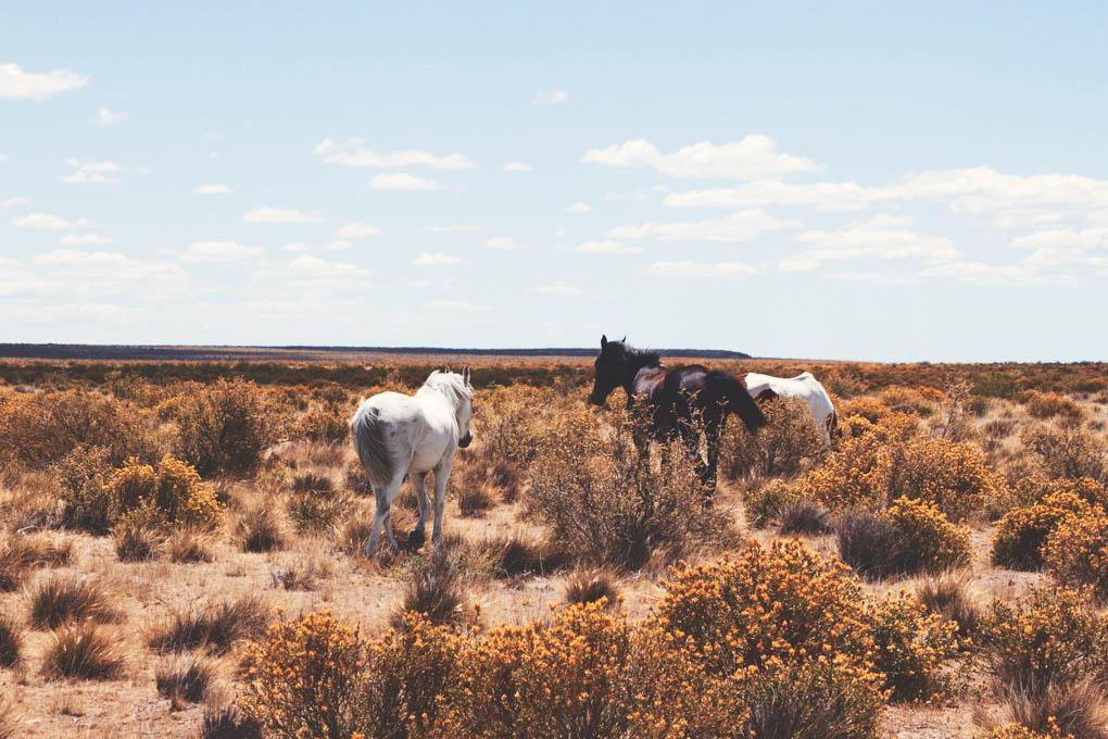 horses at an estancia in Patagonia