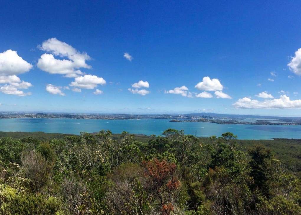 Rangitoto Island summit track view, Auckland