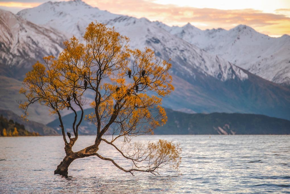 The Truth About The Wanaka Tree