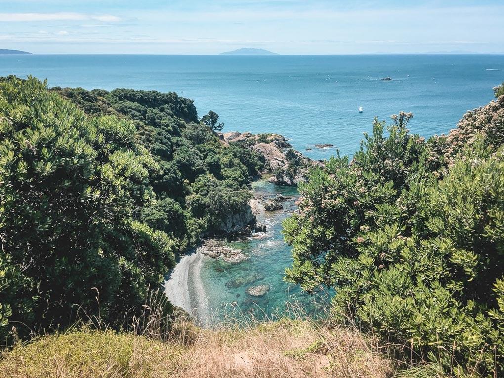 Tiritiri Matangi wildlife sanctuary near Auckland, New Zealand