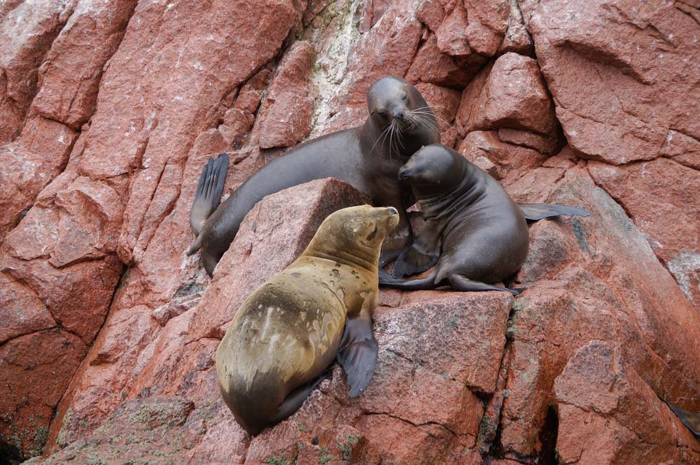 Three seals sit on a rock on our Ballestas Island tour from Lima