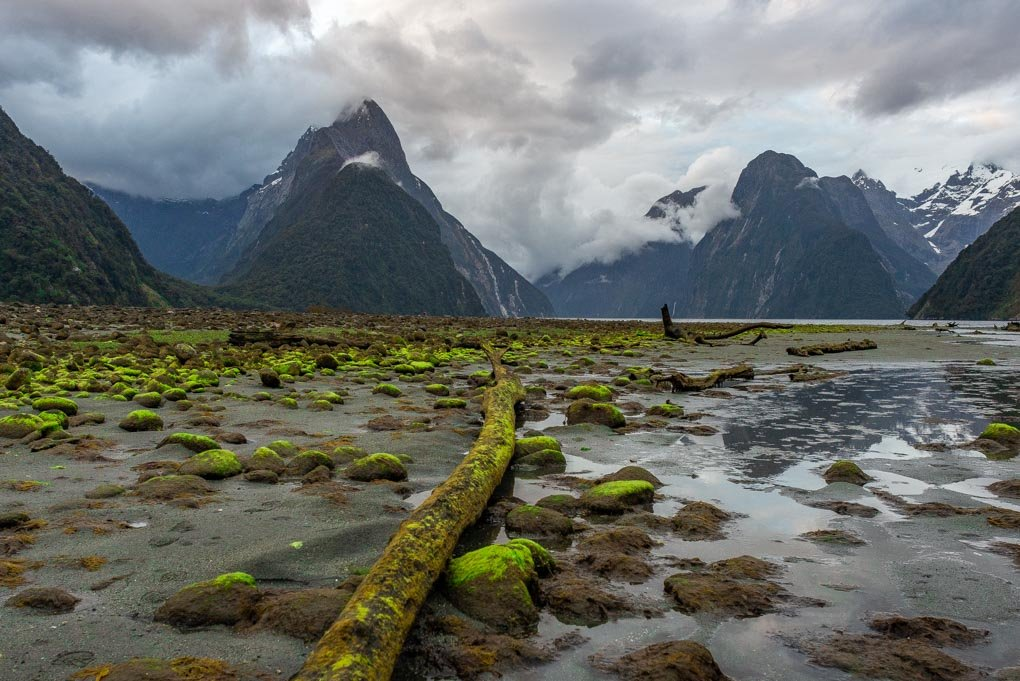 The view of Milford Sound from the forshore