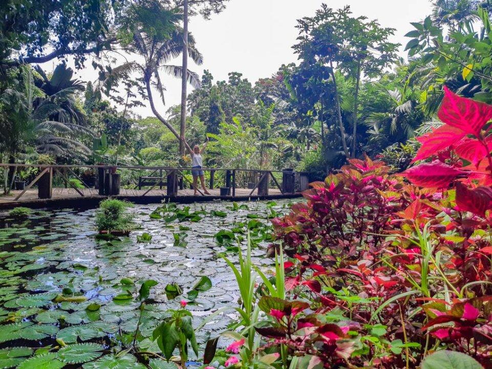 the garden of the sleeping Giant in Nadi, Fiji