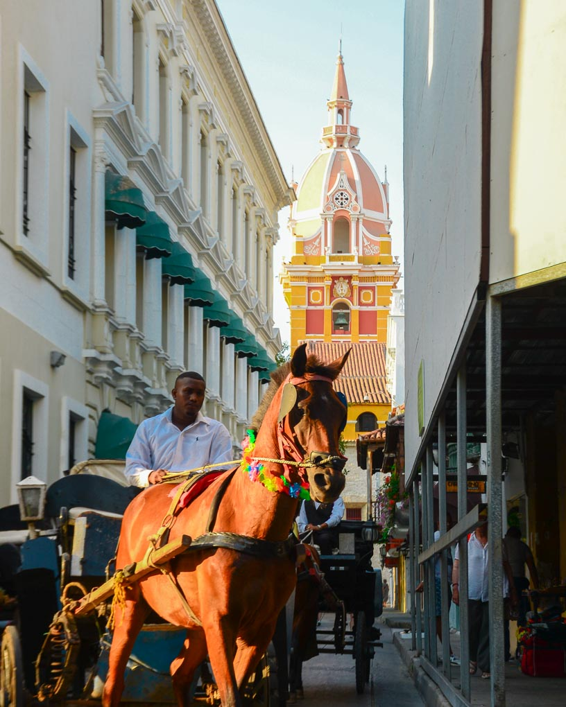 A horse walks down a street in Cartagena, Colombia