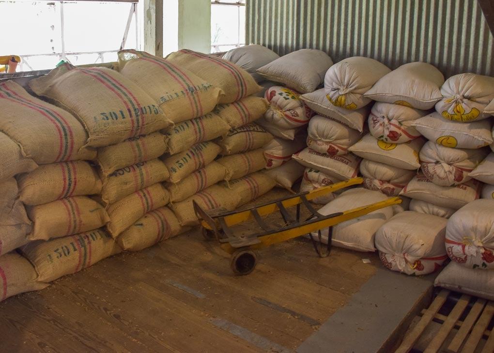 Touring a coffee farm in Minca