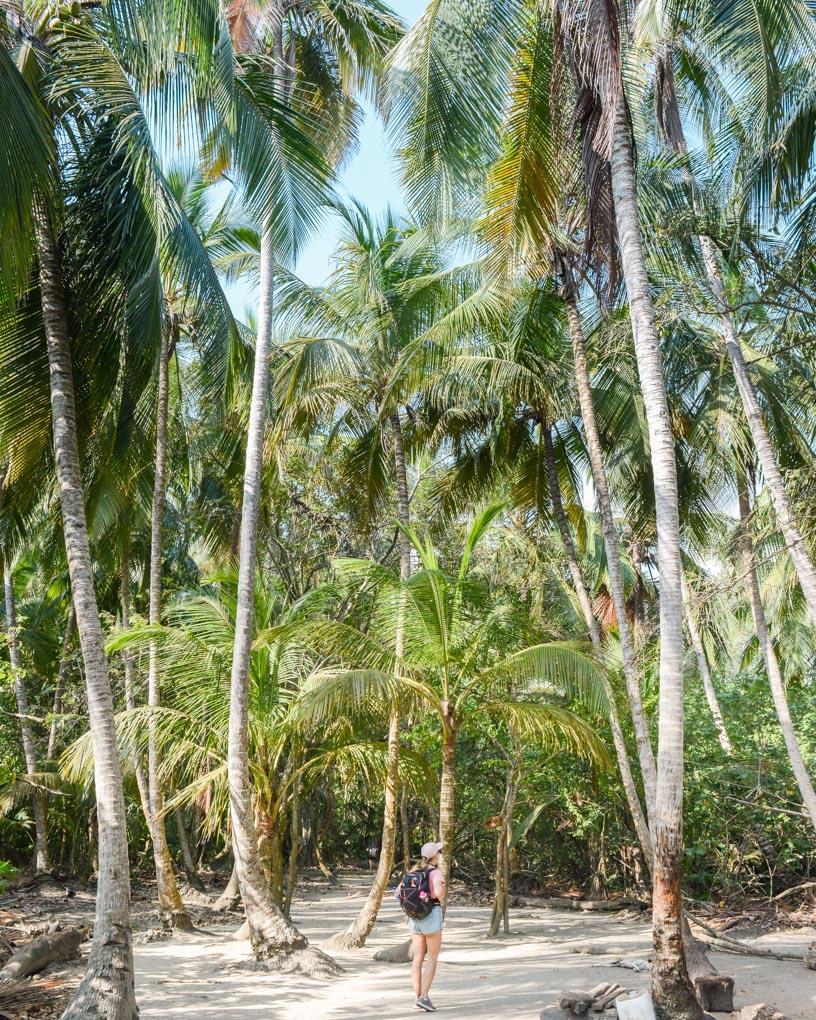 Bailey walks through palm trees in tayrona National Park