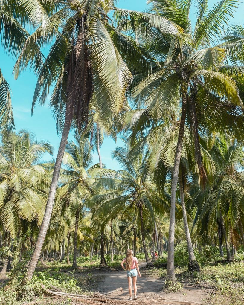 Bailey walks amoung palm trees in Tayrona National Park