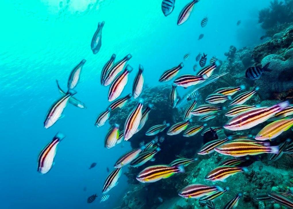 Some fish on a scuba dive in Santa Marta, Colombia