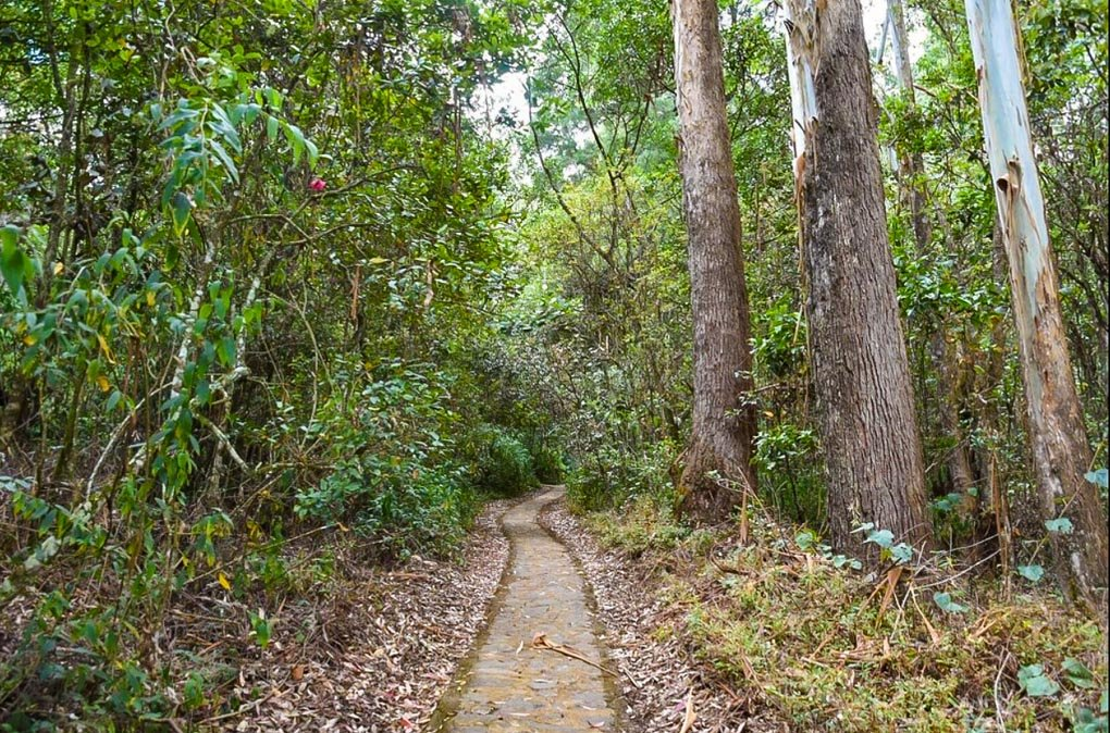 A pathway leads through the forest in Galway's Land National Park, Sri Lanka