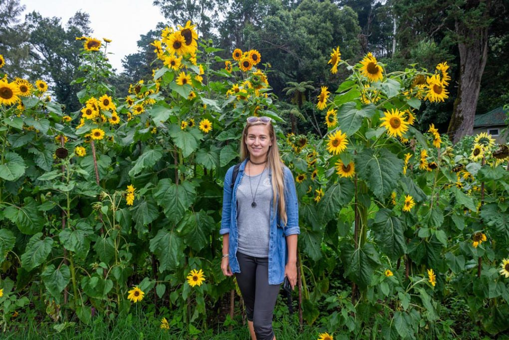 Bailey stands by some sunflowers at Victoria Park in Nuwara Eliya, Sri Lanka