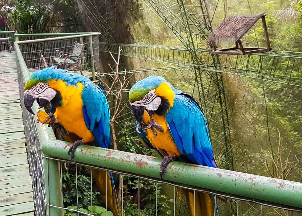 Two birds eat at the Guembe Biopark near Santa Cruz, Bolivia
