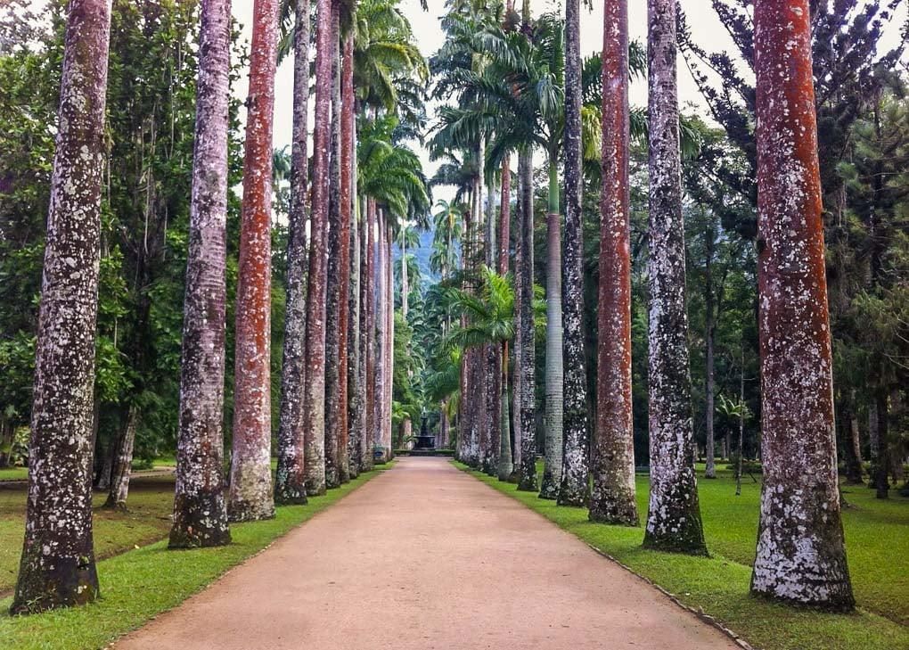 Jardim Botanico in Rio de Janeiro, Brazil