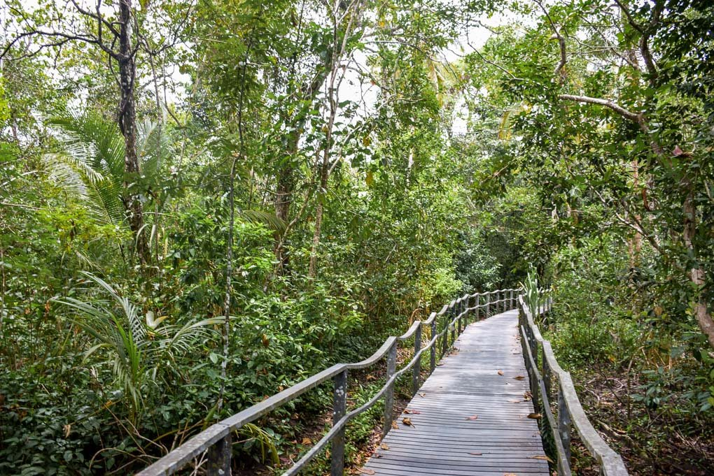 A wooden path in Cahuita National Park