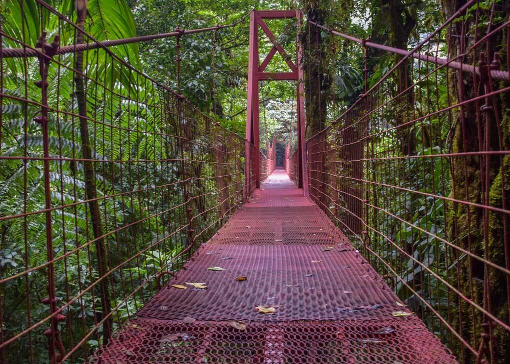 The suspension bridge in the Monteverde Cloud Forest Reserve