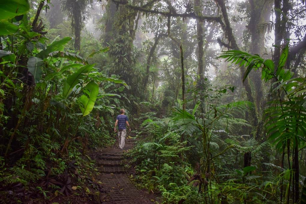 Daniel walks through the Monteverde Cloud Forest Reserve in Monteverde, Costa Rica