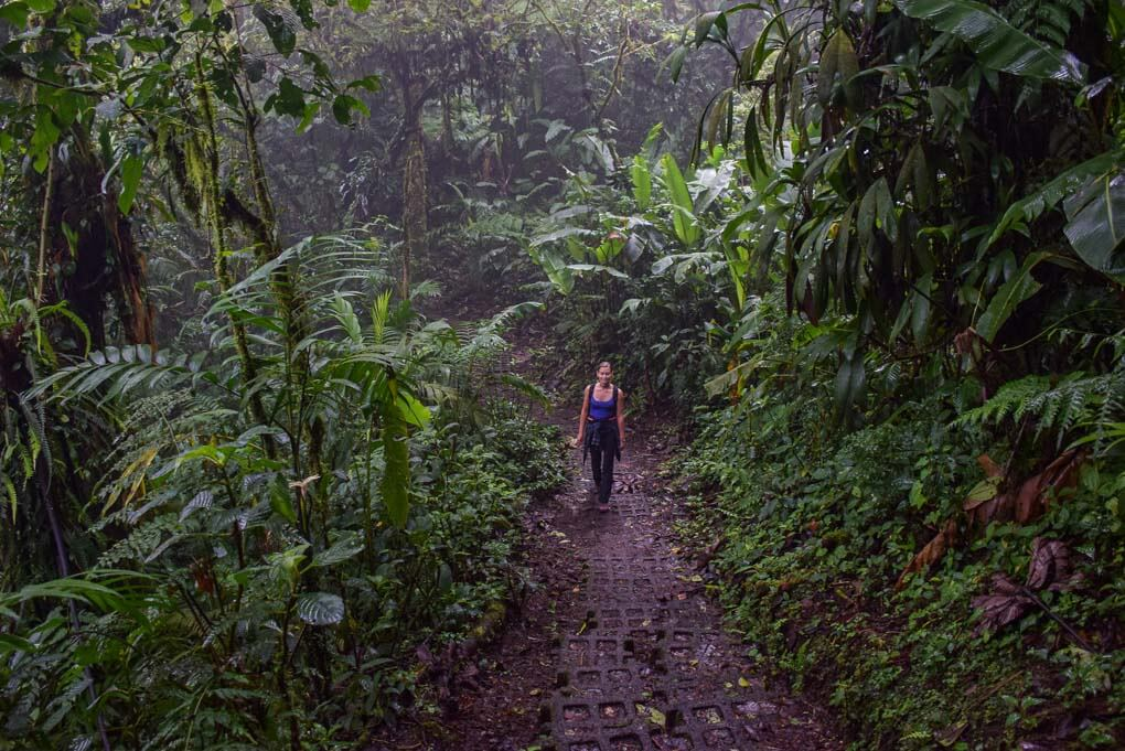 Bailey walks through the Monteverde Cloud Forest reserve in Costa Rica