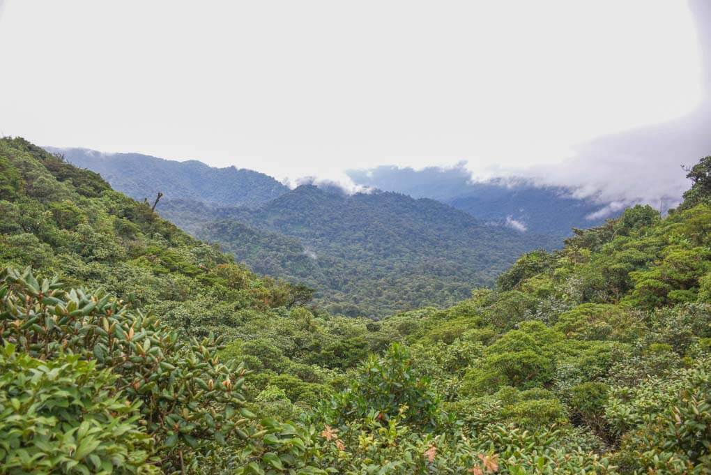 Views on the Santa Elena Cloud Forest Reserve from a viewpoint in the park!