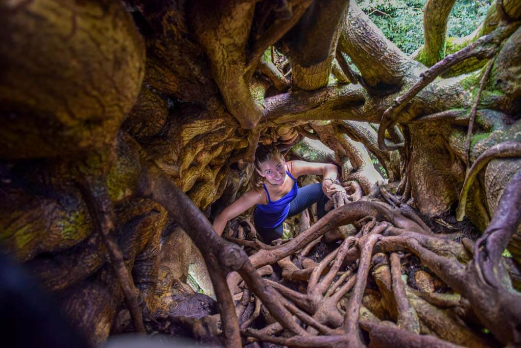 Climbing the famous Ficus Tree in Monteverde