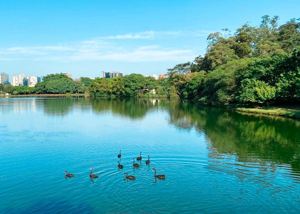 A pond in Ibirapuera Park, Soa Paulo, Brazil
