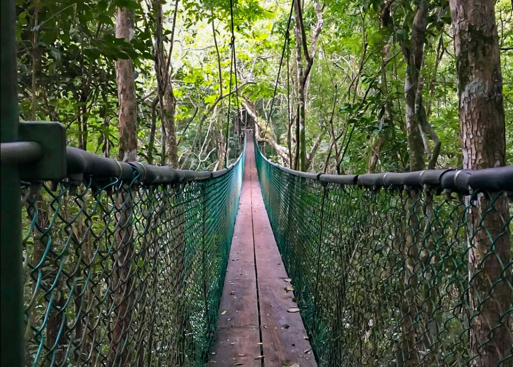 A suspension bridge in Ixpanpajul Nature Park, Flore, Guatemala