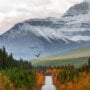 A random view of the road and mountains on the Icefields Parkway