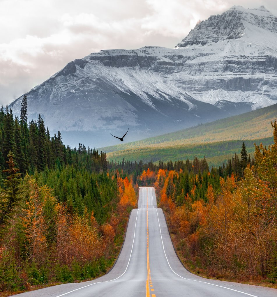 DSC_4003-EditA view of the road on the Icefields Parckway during Fall as a bird flies high above the road