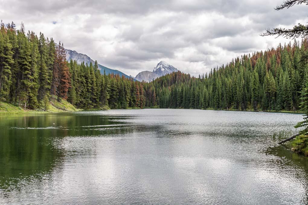 Views of Moose Lake from the Moose Lake Loop!