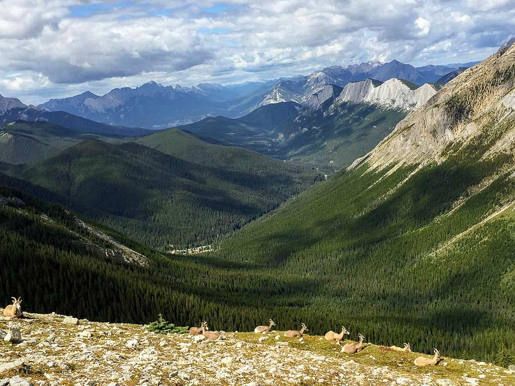 Views of the valley on the Skyline Trail in Jasper National Park