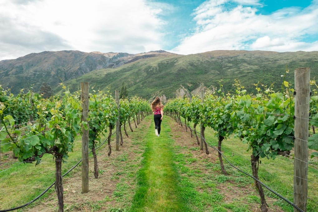 A lady runs through the vines in the Gibbston Valley near Queenstown
