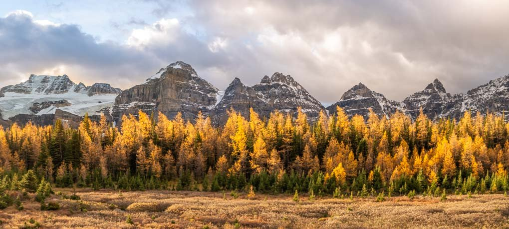 Larch trees on the Larch valley Trail during fall in Banff