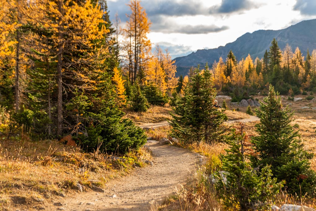 An empty path on the Larch Valley Hike in Banff