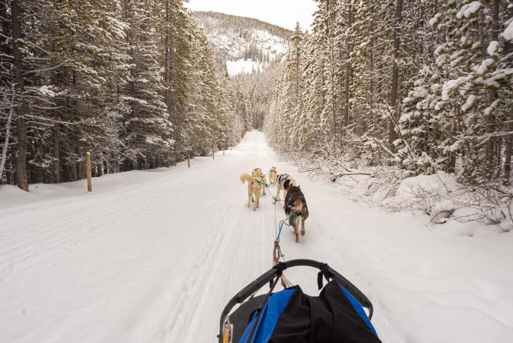 Dog sledding in Canmore, Alberta