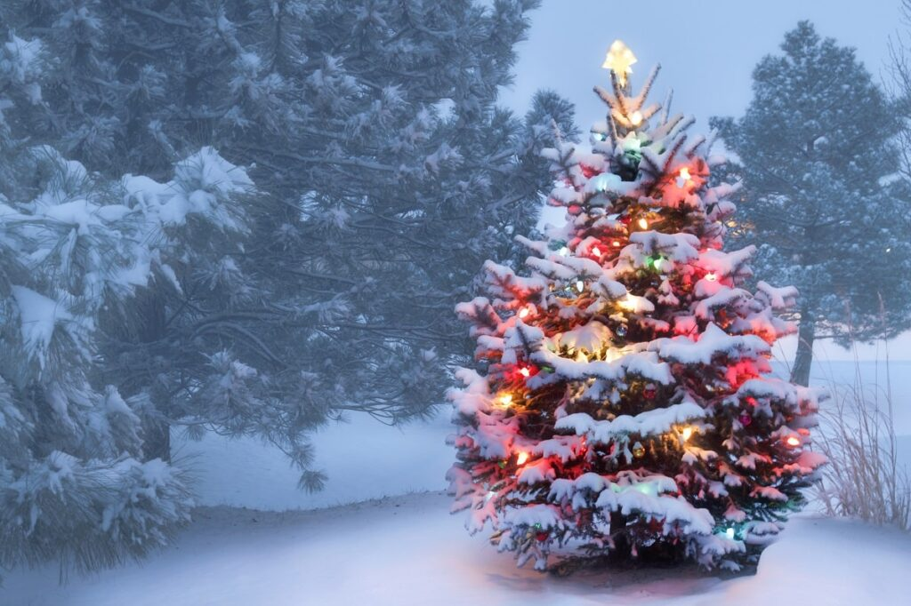 christmas tree in the snow with lights