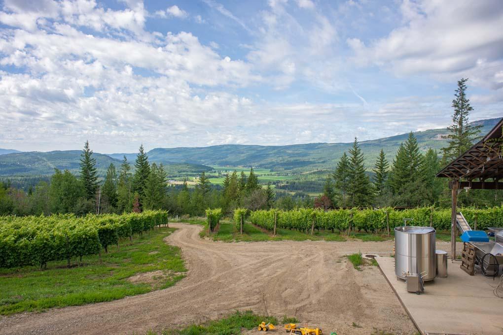 Vineyard at Larch Hills in Salmon Arm, BC