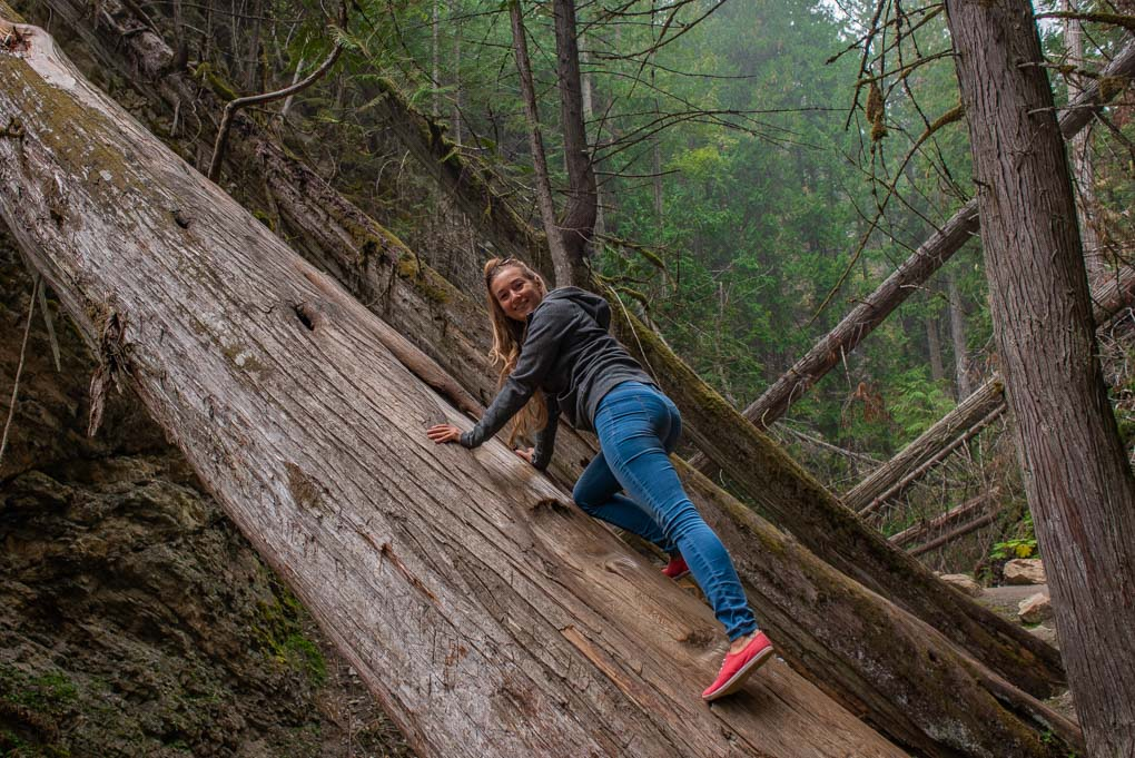 A lady on a tree on the path to Margaret Falls in Harold's Provincial Park, Salmon Arm