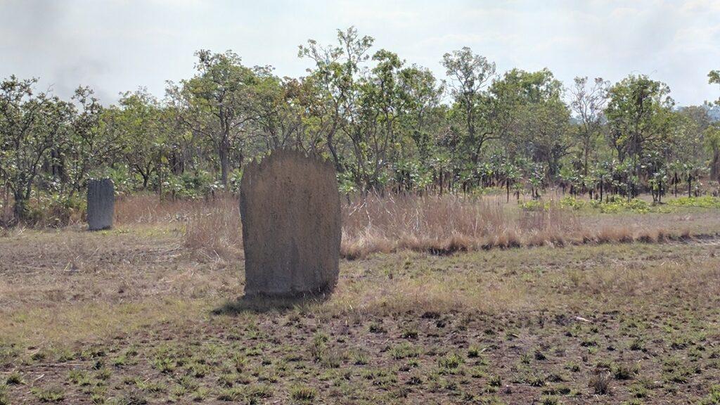 a large termite mound in Litchfield National Park near Darwin