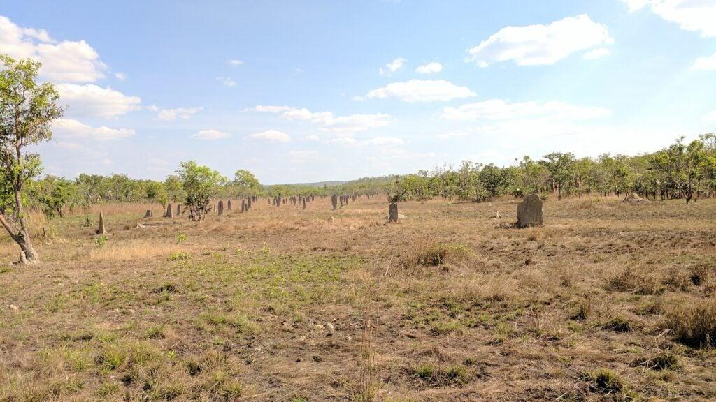 magnetic termite mound field in Litchfield